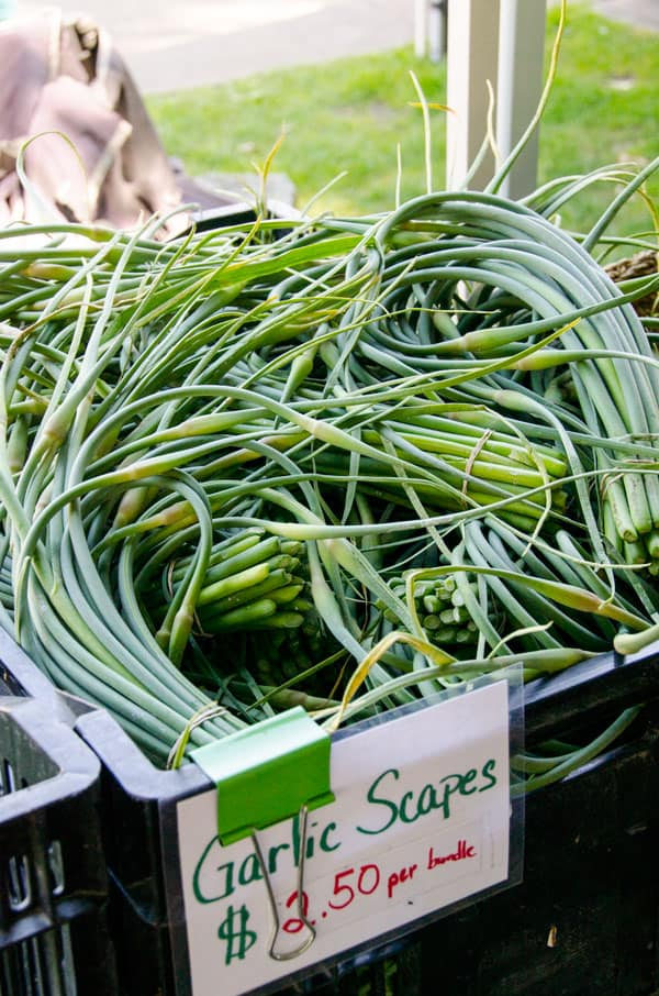 garlicscapes-farmers-market-must-buys