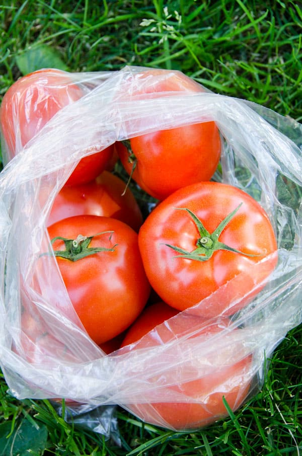 tomatoes-farmers-market-must-buys