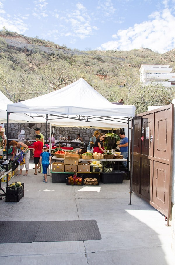 farmers market cabo san lucas