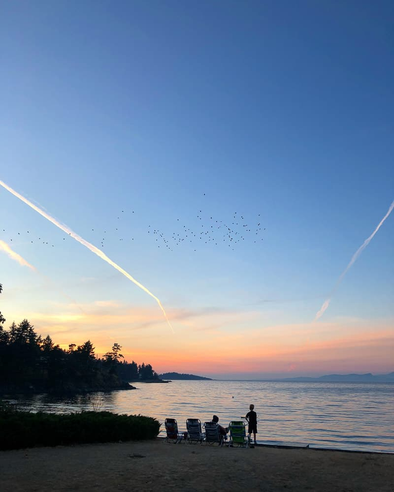 sunset over pacific ocean and people watching birds fly