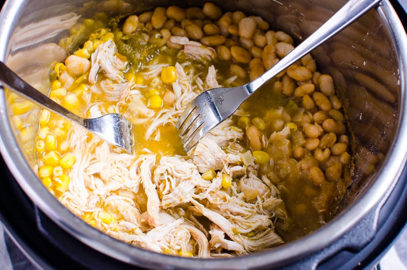 chicken shredded with 2 forks after Instant Pot White Chicken Chili is cooked